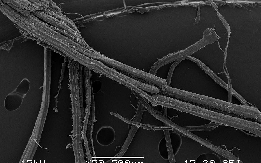 Electron micrograph of hemp fibres